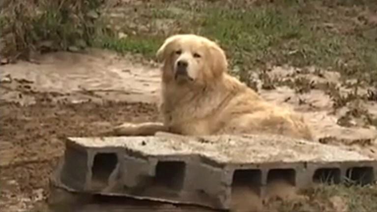 Αποτέλεσμα εικόνας για το σκυλι της νεκρης στη Μυτιληνη χατσικο