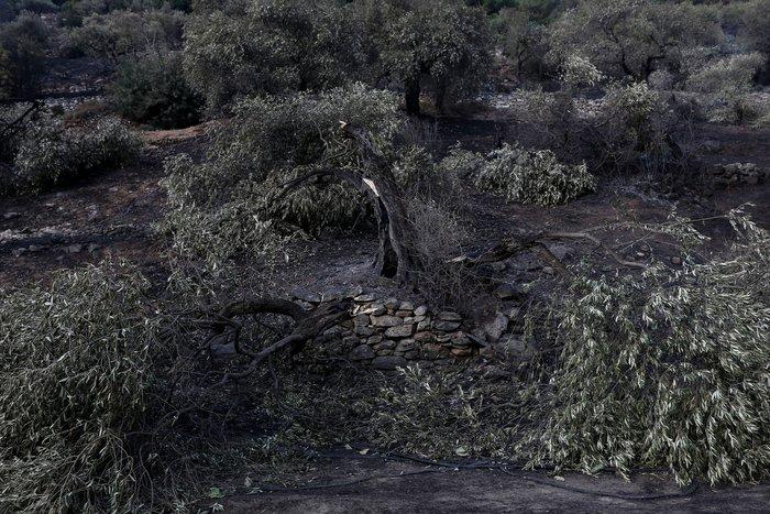 Συνεχίζεται η μάχη με τα πύρινα μέτωπα στη Θάσο - εικόνα 4