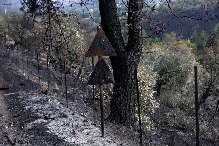 Συνεχίζεται η μάχη με τα πύρινα μέτωπα στη Θάσο - εικόνα 5