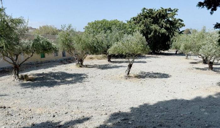 Σε χωράφι με ελιές στην Κω ψάχνουν για τον μικρό Μπεν - εικόνα 2