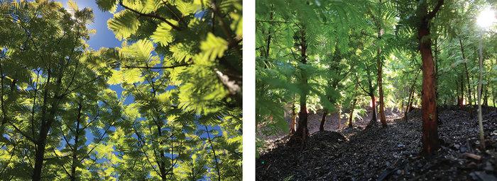 Ένα μαγευτικό δάσος μεγαλώνει στο Μπρούκλιν