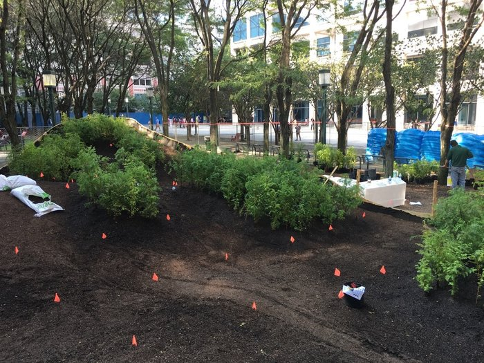 Ένα μαγευτικό δάσος μεγαλώνει στο Μπρούκλιν - εικόνα 7