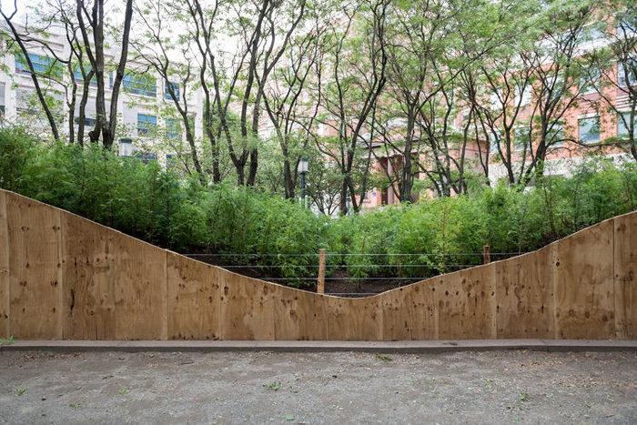 Ένα μαγευτικό δάσος μεγαλώνει στο Μπρούκλιν - εικόνα 3