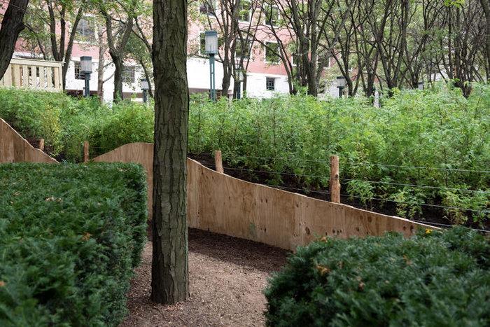 Ένα μαγευτικό δάσος μεγαλώνει στο Μπρούκλιν - εικόνα 4