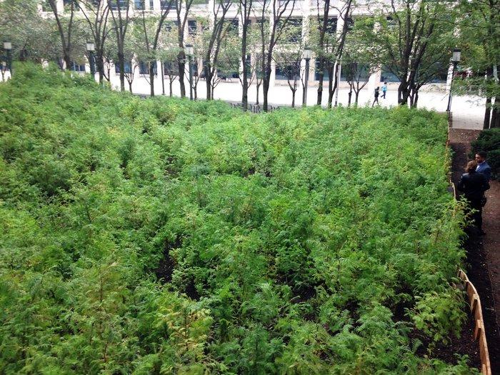 Ένα μαγευτικό δάσος μεγαλώνει στο Μπρούκλιν - εικόνα 5