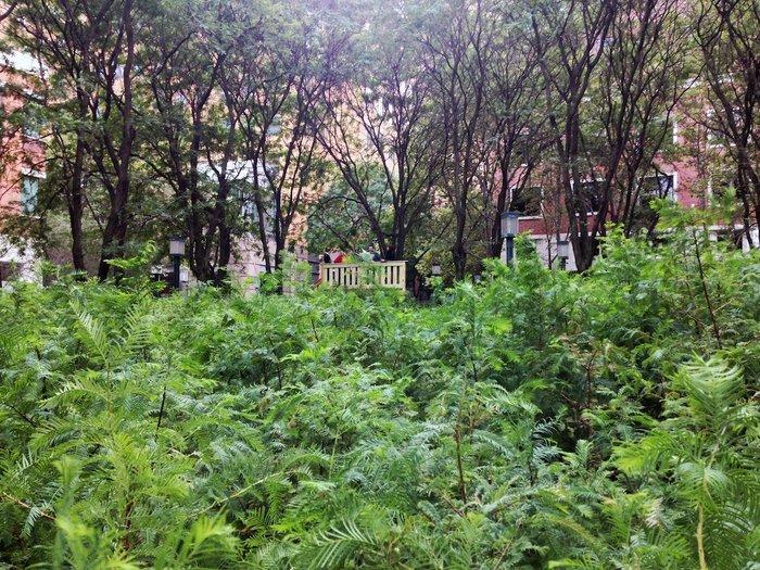 Ένα μαγευτικό δάσος μεγαλώνει στο Μπρούκλιν - εικόνα 6
