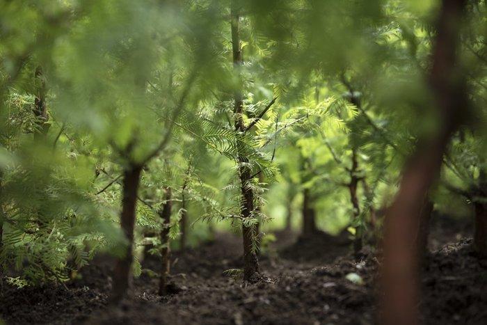 Ένα μαγευτικό δάσος μεγαλώνει στο Μπρούκλιν - εικόνα 2