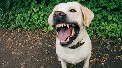 Αγρια επίθεση σκύλου στο Εσσεξ, κατασπάραξε βρέφος