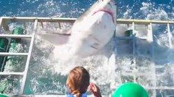 Τρόμος από την εισβολή λευκού καρχαρία σε κλουβί video