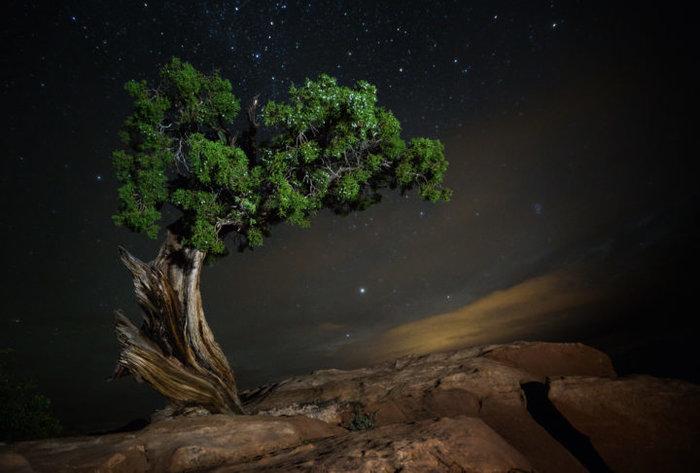 Μαγευτικές εικόνες των πιο ηλικιωμένων δέντρων του κόσμου - εικόνα 2
