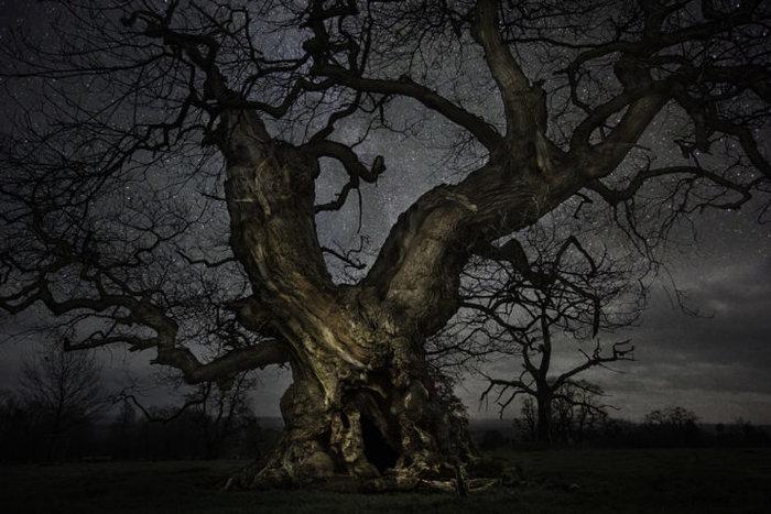 Μαγευτικές εικόνες των πιο ηλικιωμένων δέντρων του κόσμου - εικόνα 4