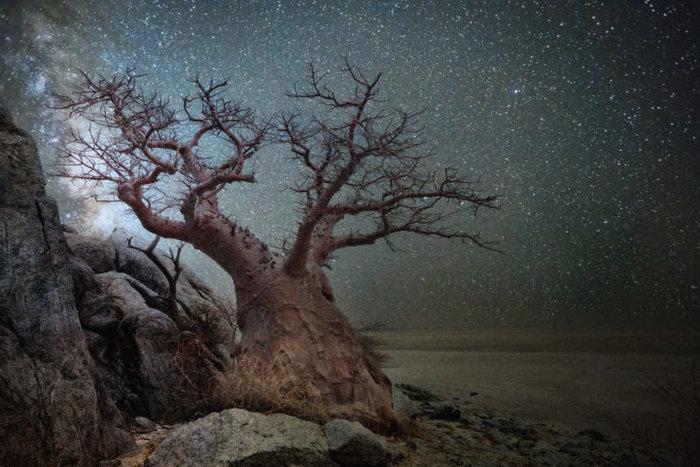 Μαγευτικές εικόνες των πιο ηλικιωμένων δέντρων του κόσμου - εικόνα 5