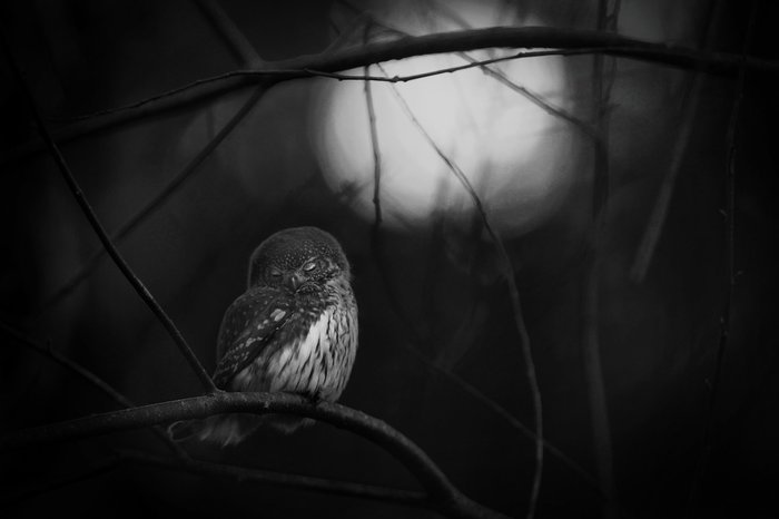 Mats Andersson, Sweden Winner, black and white category