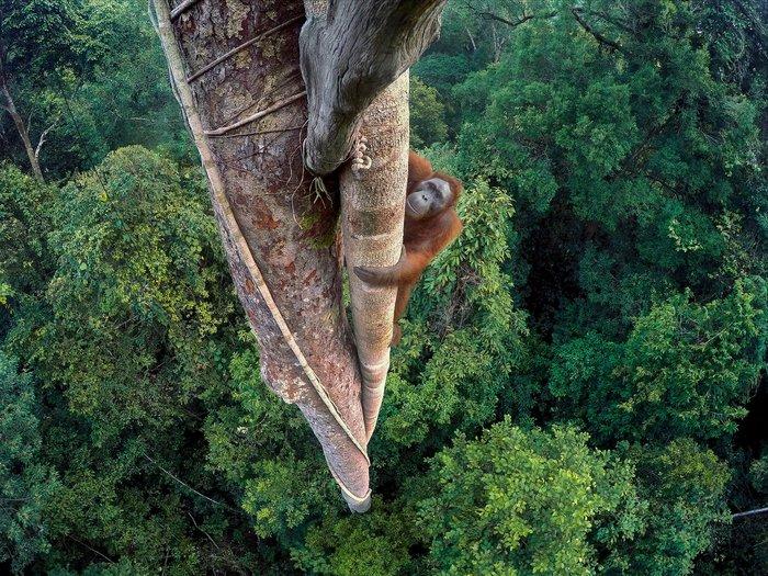 Tim Laman, US Winner, wildlife photographer of the year