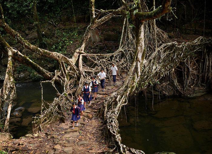 Παιδιά ταξιδεύουν μέσα από το δάσος περνώντας μια γέφυρα από ρίζα δέντρου. Ινδία