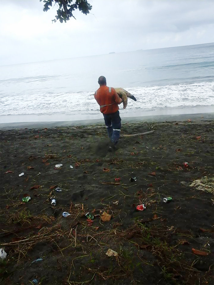 Ανδρας αγοράζει χελώνες και τις απελευθερώνει - εικόνα 2