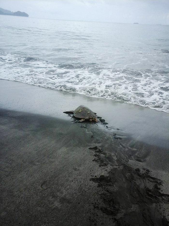 Ανδρας αγοράζει χελώνες και τις απελευθερώνει - εικόνα 3