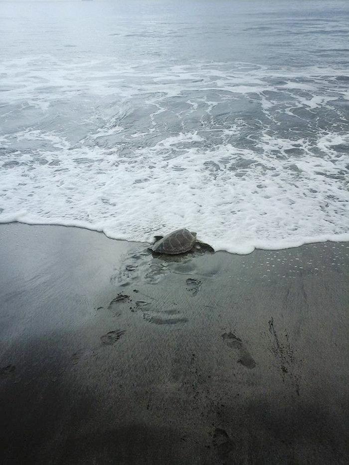 Ανδρας αγοράζει χελώνες και τις απελευθερώνει - εικόνα 4