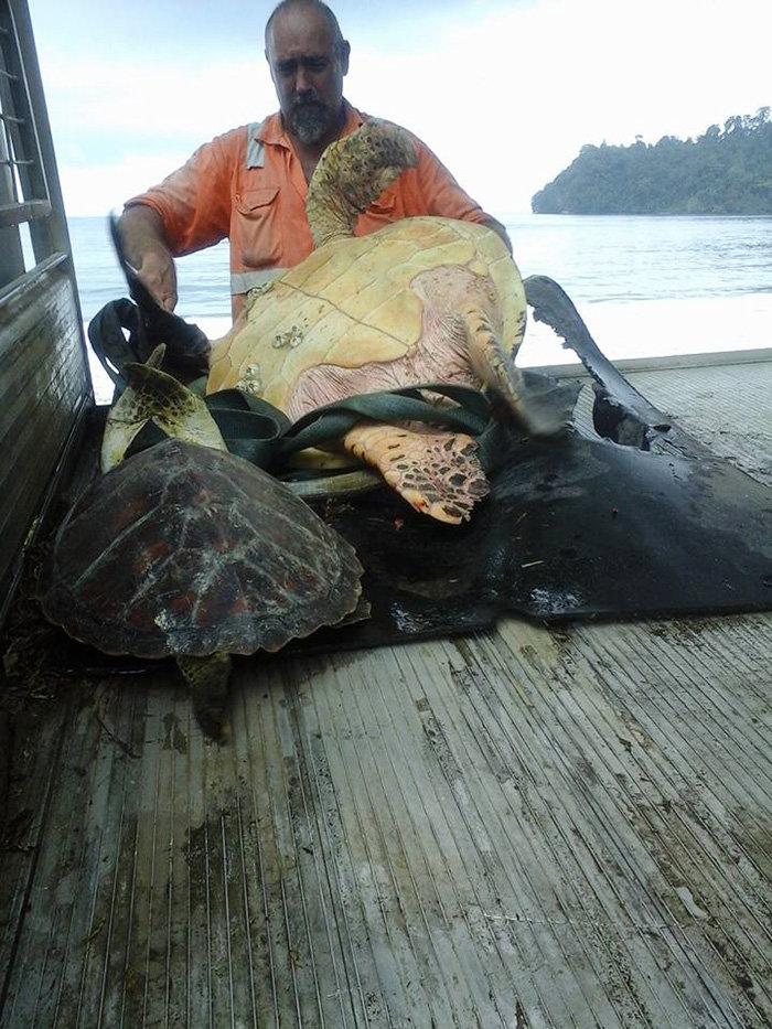 Ανδρας αγοράζει χελώνες και τις απελευθερώνει