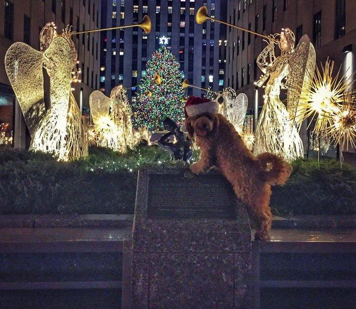 Χριστούγεννα στο Rockefeller:Νύφες, σκυλάκια, γαλλικά φιλιά σε μαγικό φόντο