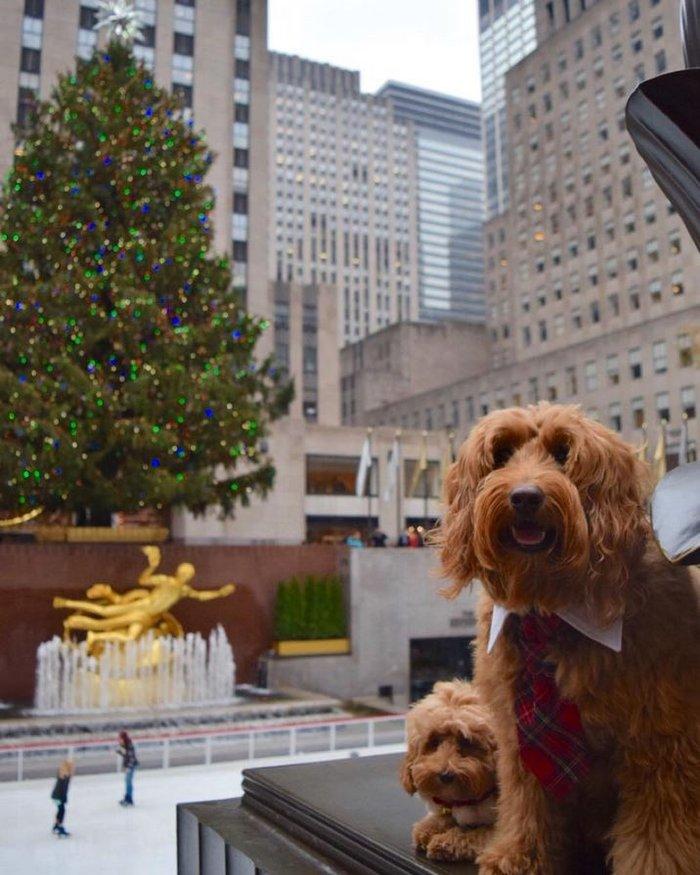 Χριστούγεννα στο Rockefeller:Νύφες, σκυλάκια, γαλλικά φιλιά σε μαγικό φόντο - εικόνα 9