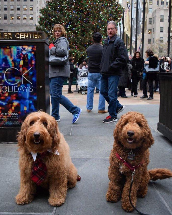 Χριστούγεννα στο Rockefeller:Νύφες, σκυλάκια, γαλλικά φιλιά σε μαγικό φόντο - εικόνα 10