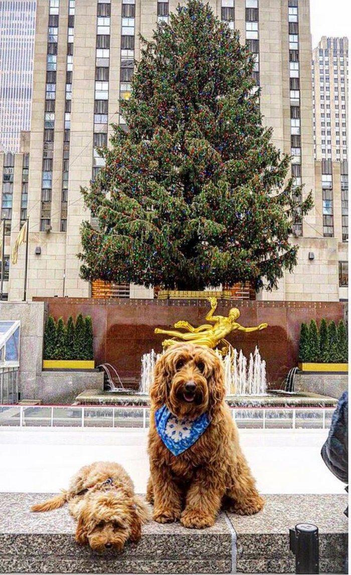 Χριστούγεννα στο Rockefeller:Νύφες, σκυλάκια, γαλλικά φιλιά σε μαγικό φόντο - εικόνα 11