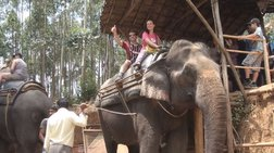 apagoreuontai-dia-nomou-boltes-me-elefantes-stin-india