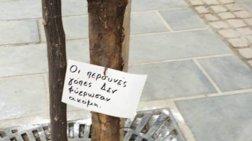 Το φαρμακερό μήνυμα για τις «γόπες»  στα δέντρα