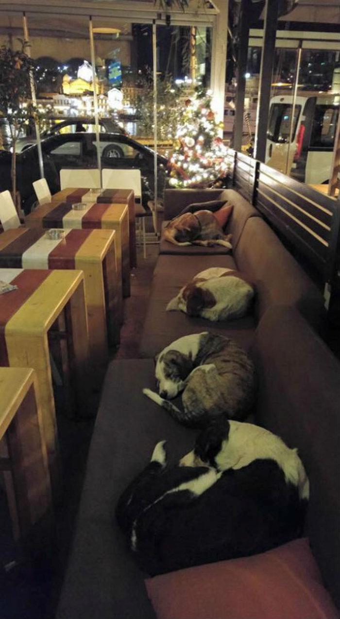 Αυτό το ελληνικό cafe στη Λέσβο αφήνει τα αδέσποτα να κοιμούνται μέσα