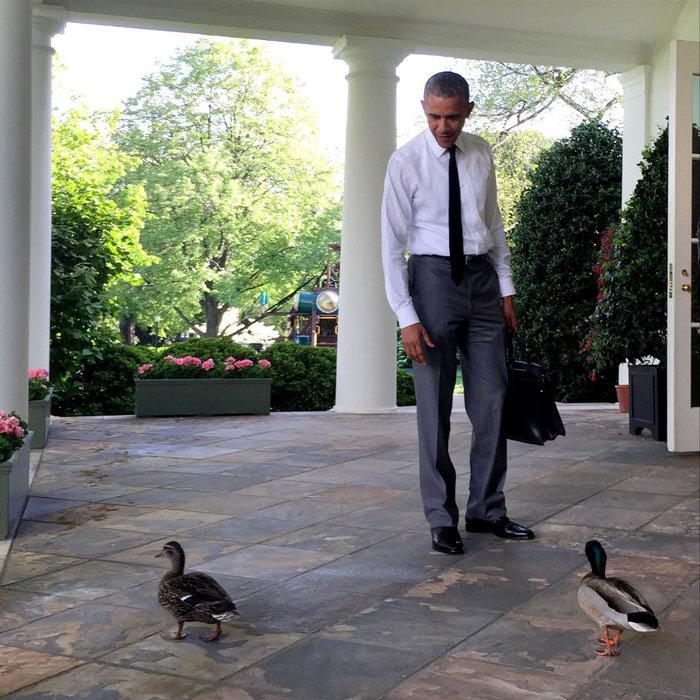 Οι 58 εντυπωσιακές φωτογραφίες του Ομπάμα το 2015 - εικόνα 53