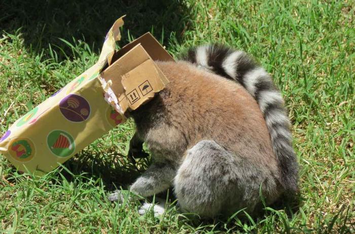 Ζώα σε ζωολογικό κήπο ανοίγουν τα χριστουγεννιάτικα δώρα τους - εικόνα 4