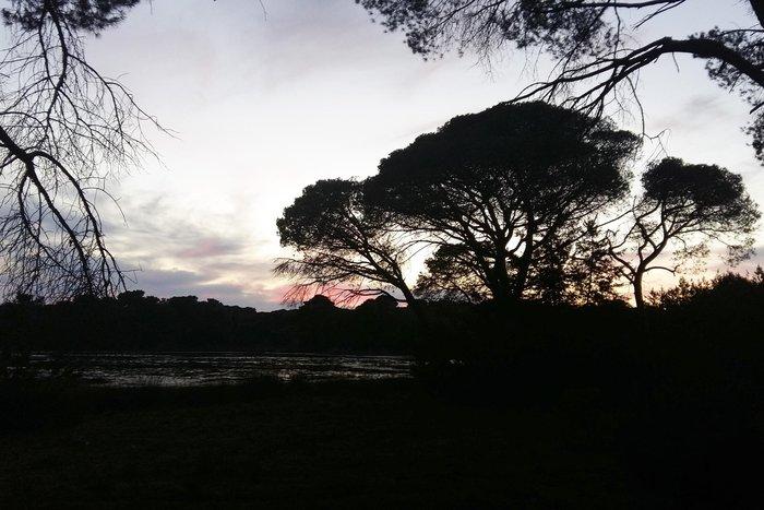 Ηλιοβασίλεμα στο δάσος της Στροφυλιάς στον Άραξο - εικόνα 3