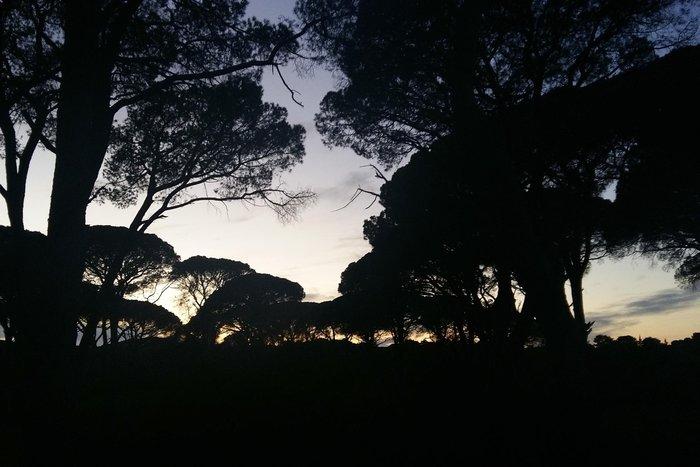 Ηλιοβασίλεμα στο δάσος της Στροφυλιάς στον Άραξο - εικόνα 7