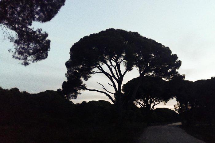 Ηλιοβασίλεμα στο δάσος της Στροφυλιάς στον Άραξο - εικόνα 8