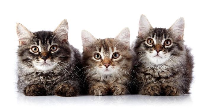 Η αλήθεια ανατρέπει την επιστήμη για τις γάτες;