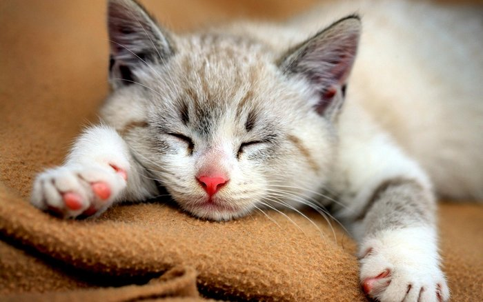 Η αλήθεια ανατρέπει την επιστήμη για τις γάτες; - εικόνα 3
