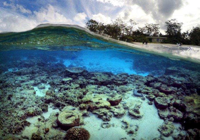 Χελώνα ψάχνει για τροφή σε λίμνη της Αυστραλίας