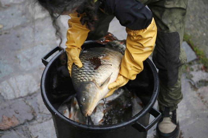 Δείτε τι βρήκαν δύτες στην κοίτη ποταμού στη Γαλλία - εικόνα 8