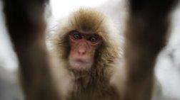 Έχασε τη δίκη για πνευματικά δικαιώματα η... μαϊμού που έβγαλε selfie