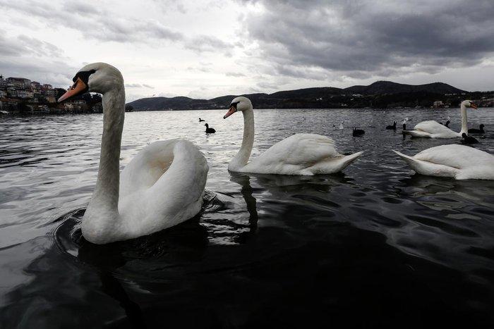 Μαγευτικές εικόνες από τη λίμνη της Καστοριάς - εικόνα 3