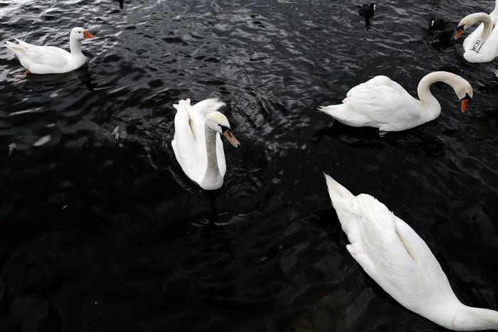 Μαγευτικές εικόνες από τη λίμνη της Καστοριάς - εικόνα 4