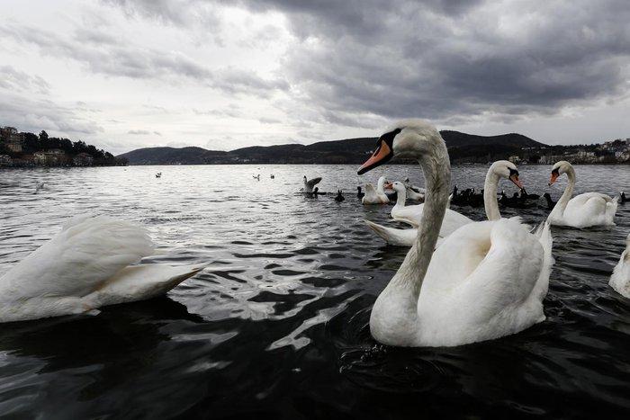 Μαγευτικές εικόνες από τη λίμνη της Καστοριάς - εικόνα 5
