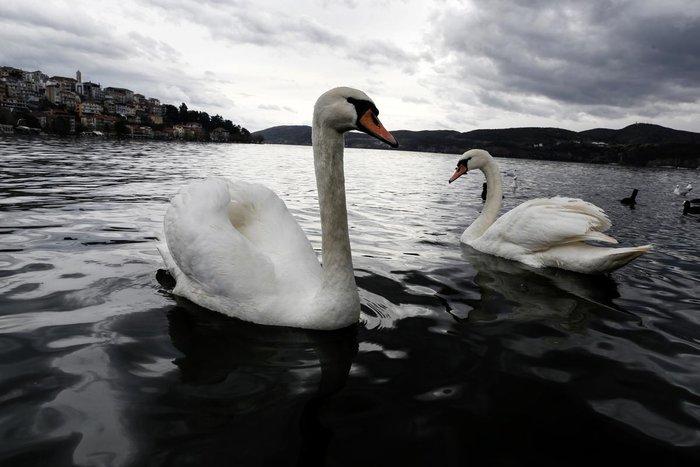 Μαγευτικές εικόνες από τη λίμνη της Καστοριάς - εικόνα 6