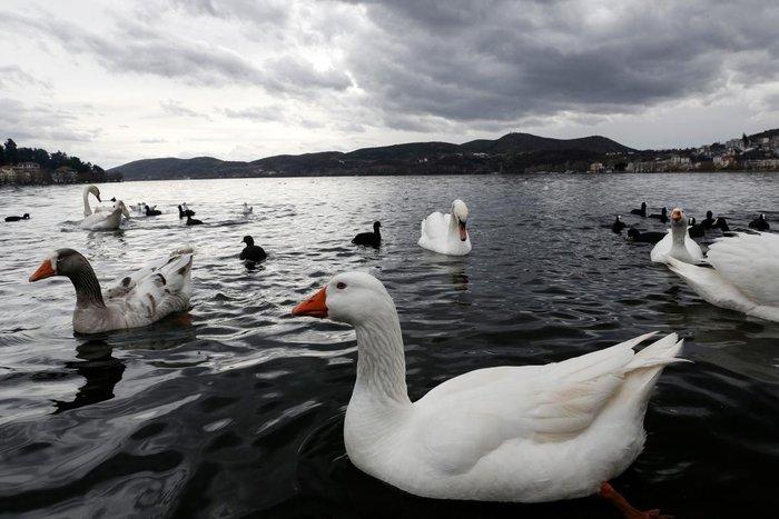 Μαγευτικές εικόνες από τη λίμνη της Καστοριάς - εικόνα 8