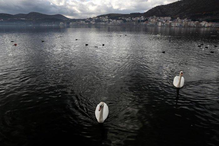 Μαγευτικές εικόνες από τη λίμνη της Καστοριάς - εικόνα 12