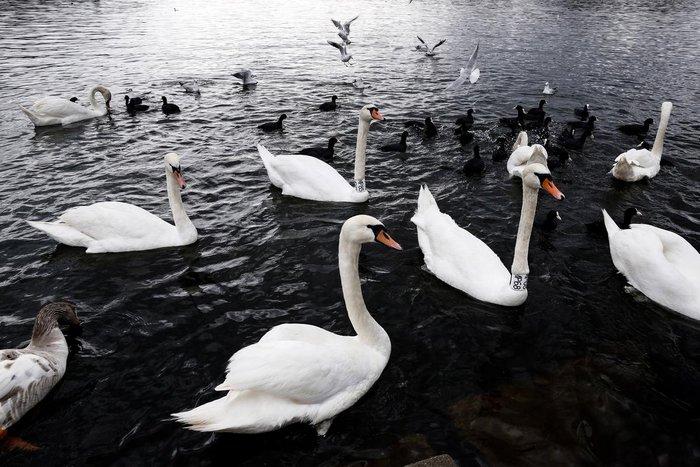 Μαγευτικές εικόνες από τη λίμνη της Καστοριάς - εικόνα 14