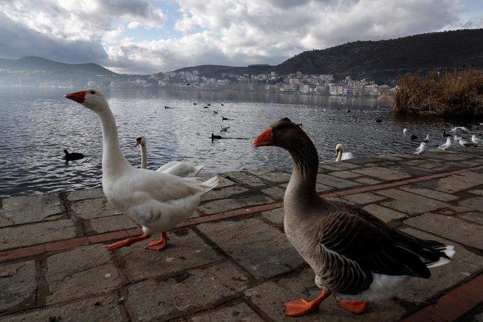Μαγευτικές εικόνες από τη λίμνη της Καστοριάς - εικόνα 17