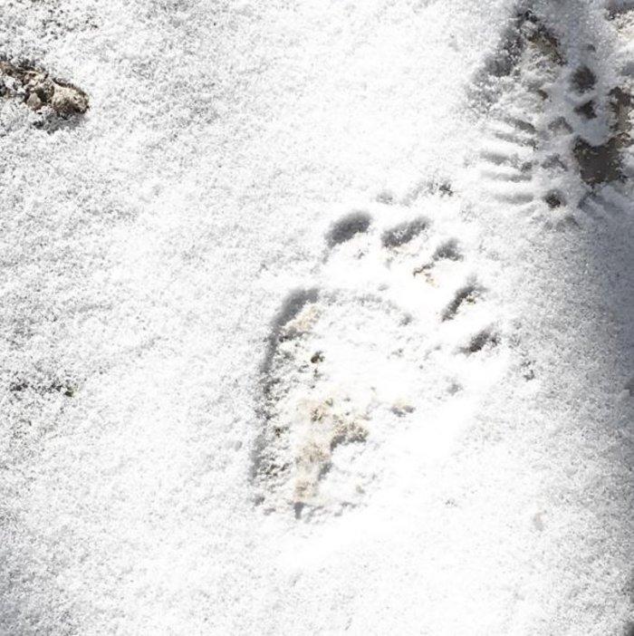 'Οταν μια αρκούδα πήρε στο κυνήγι τον...Ψυχάρη - εικόνα 2
