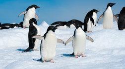Πόσο καλά γνωρίζετε τους πιγκουίνους;